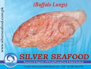 Buffalo-Lungs